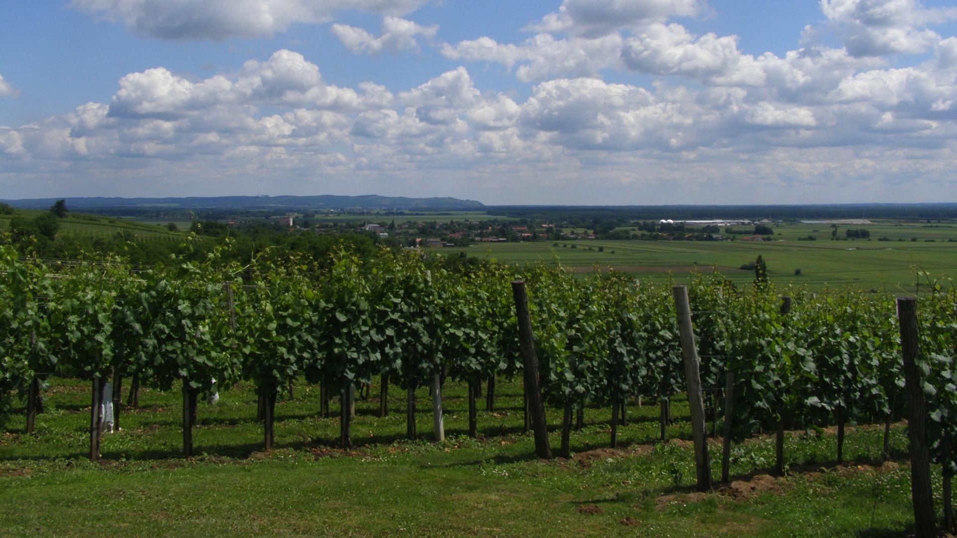 Kilátás a strehovci szőlőhegyről...