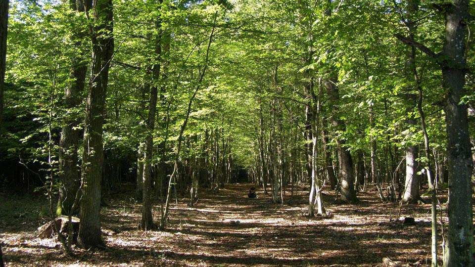 Őrség, erdő
